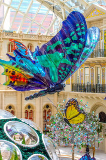 Butterfly Pavilion | Venue Arts