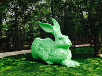 Giant Bunny Rabbit